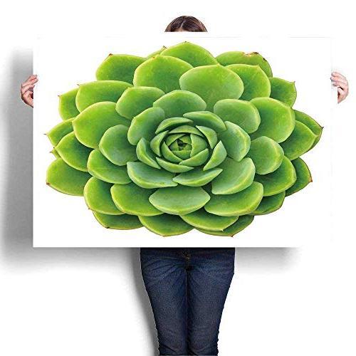 canvas wall succulent rosette